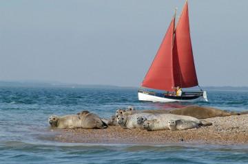 seals-at-morstomn